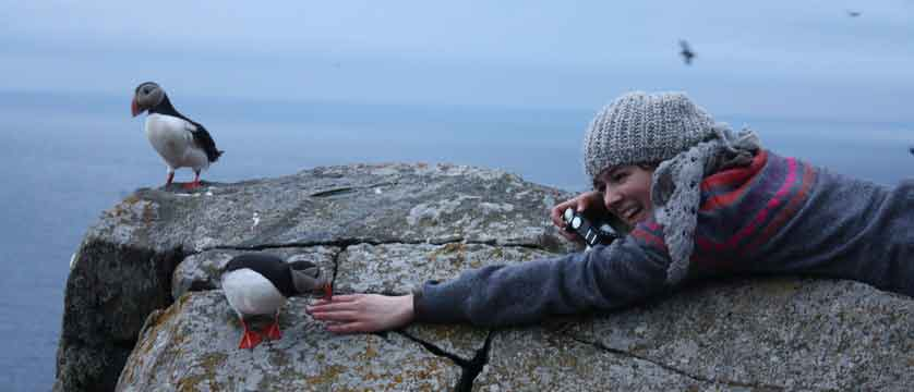 Puffin at Runde bird island near Ålesund.jpg